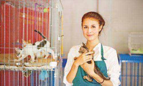Katzen- und Hundehaltung in Zoohandlungen wird verboten