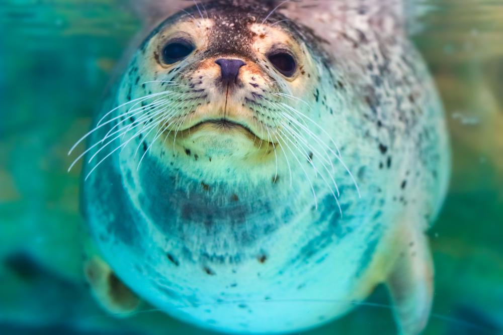Foto von in Plastiknetz gefangener Robbe erschüttert die Welt