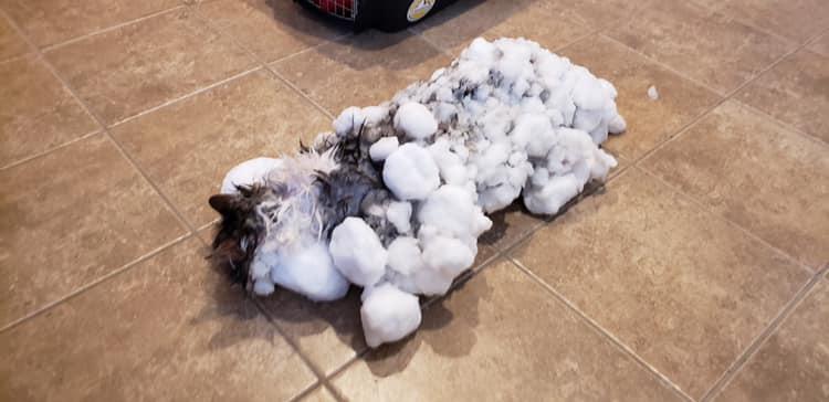 Diese eingefrorene Katze wurde von Ärzten aufgetaut und gerettet