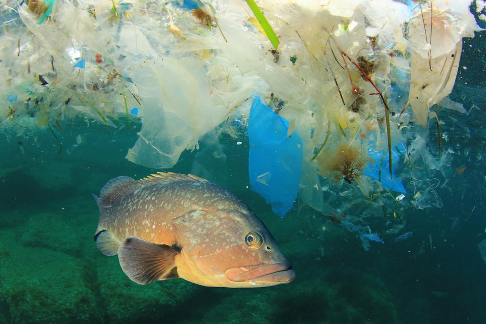 Großbritannien: Fast alle Meerestiere haben Mikroplastik im Magen