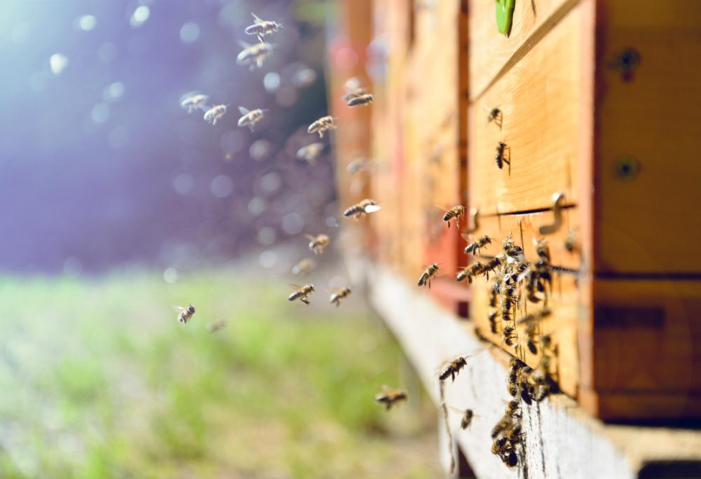 3,5 Millionen mehr Bienen dank Wiener Startup Hektar Nektar