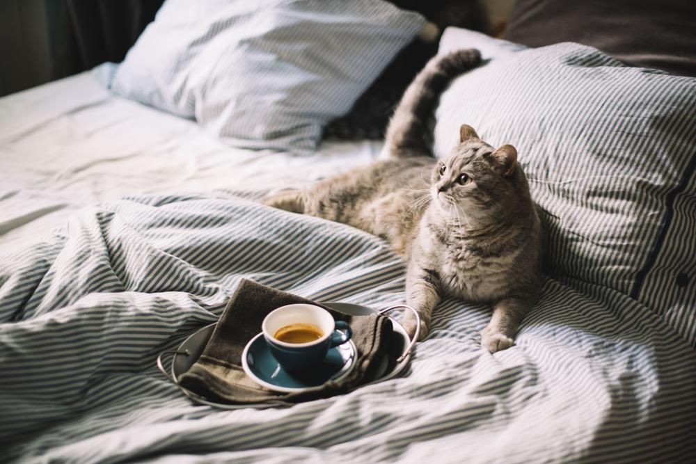 5 Tipps, um morgens leicht aufzustehen, obwohl man ein Langschläfer ist