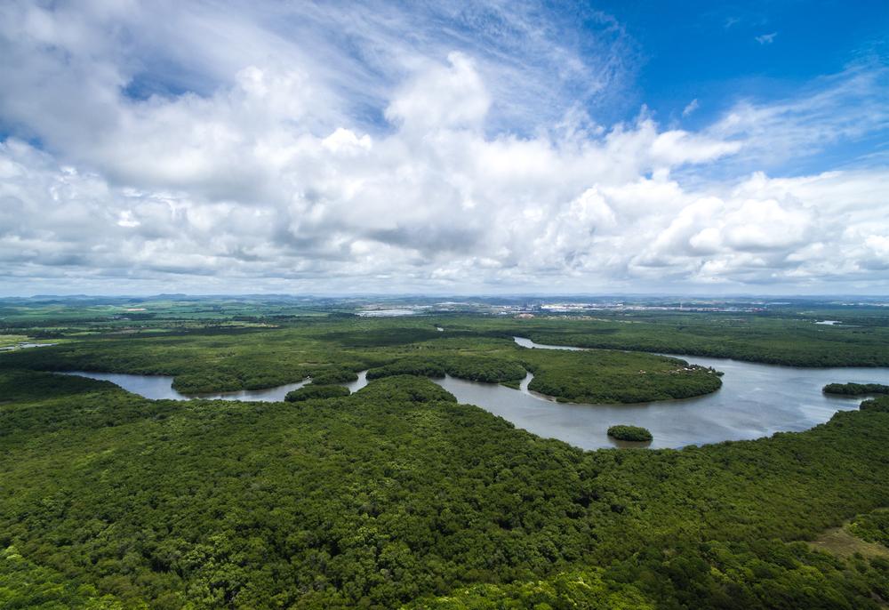 12 Millionen Hektar Regenwald verschwunden: Forscher fordern Rettung