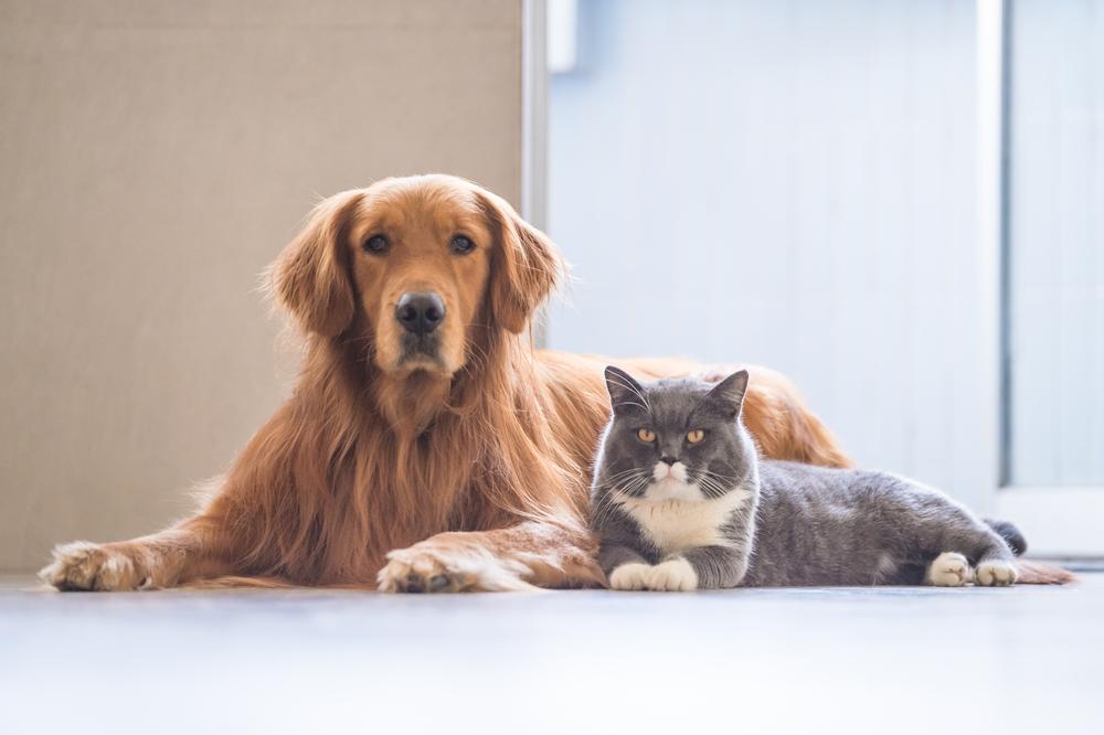 Dieses Haustier macht Menschen am glücklichsten