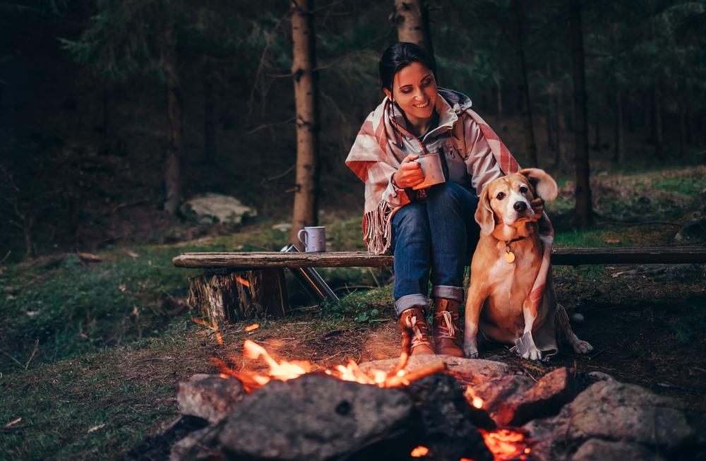 Autoreise mit Hund: Worauf du achten musst