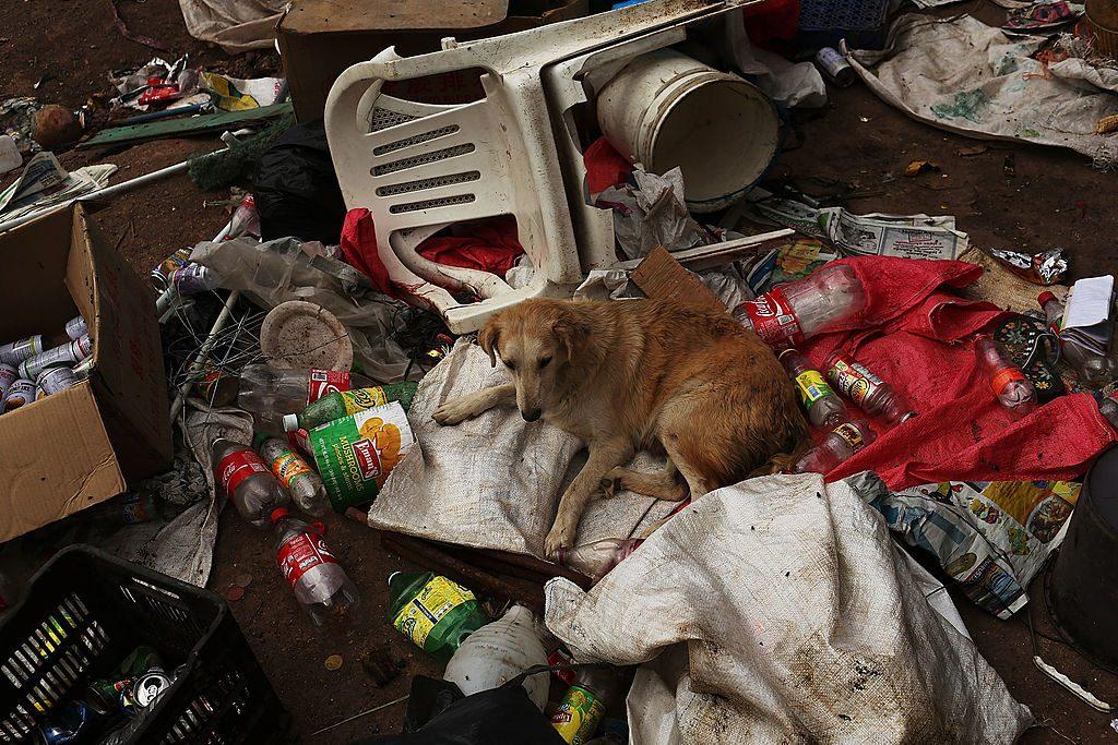 Familie ließ 68 Hunde verwahrlosen