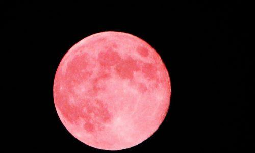 Pinker Vollmond im April: Wann und wo er zu sehen ist