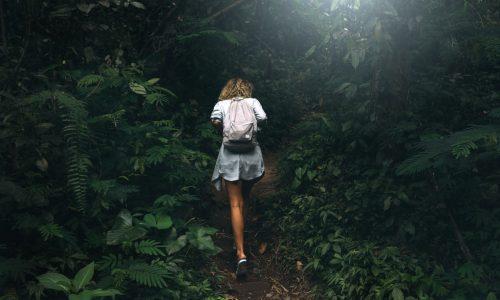Von Insekten ernährt: Wanderin nach 17 Tagen in Wildnis lebend gefunden