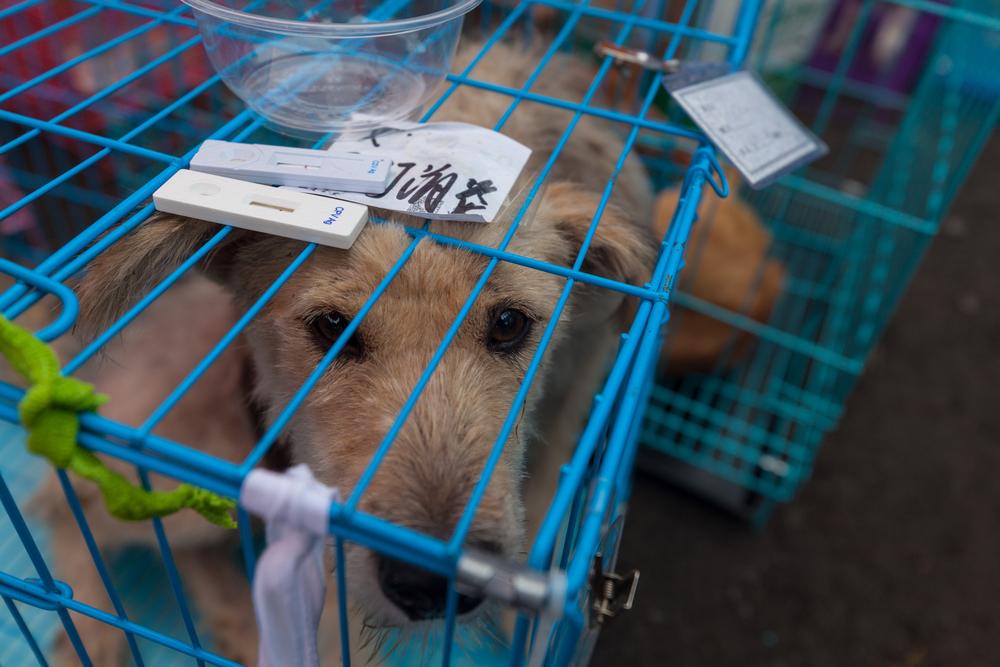 China: Petition gegen Hundefleisch-Festival