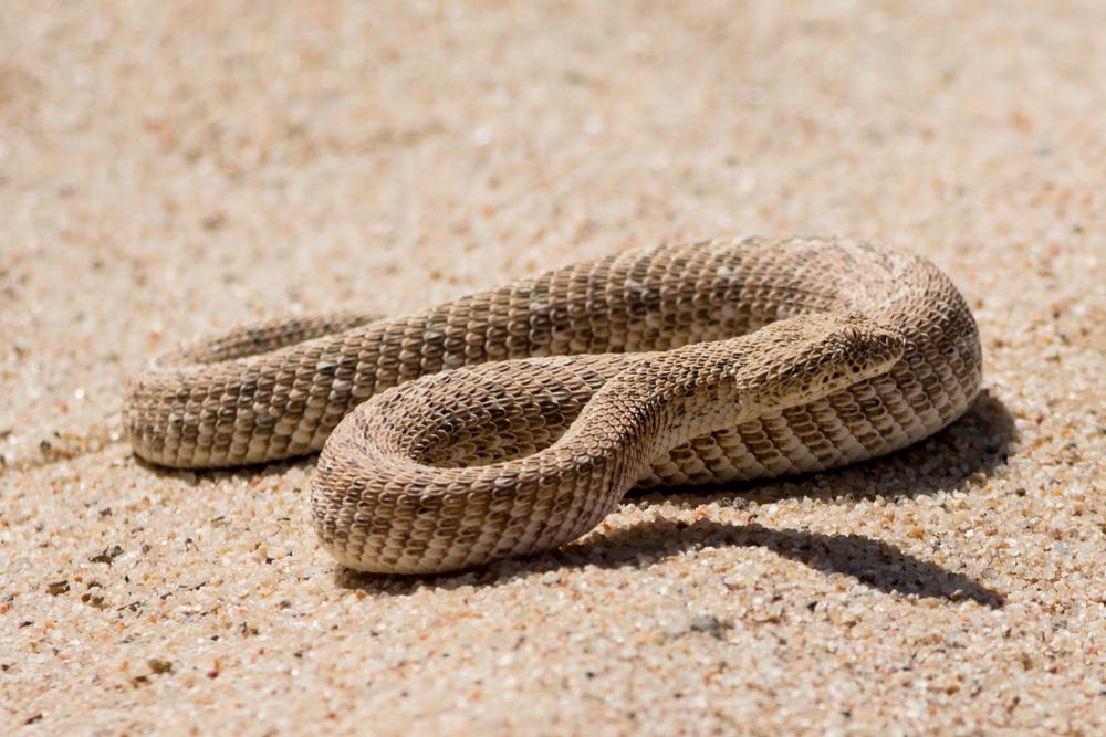 Australien: Schlange mit drei Augen entdeckt