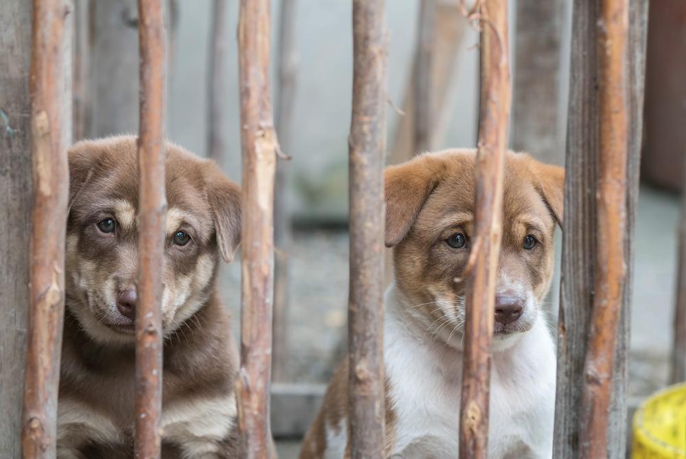 Mehr als 130 verwahrloste Hunde in US-Villa in Kalifornien gefunden