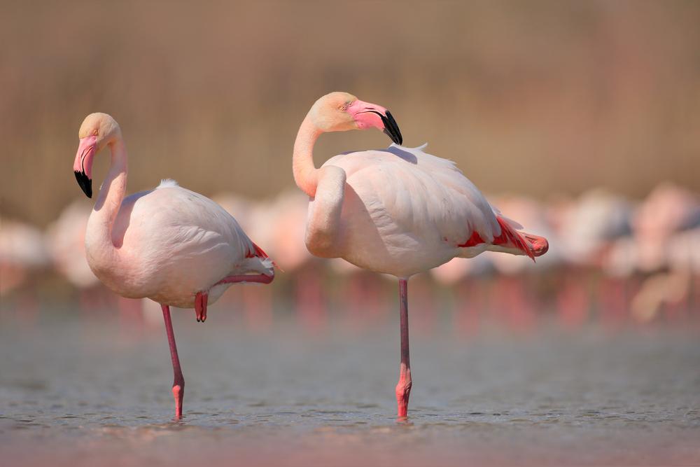 """Flamingo Pose"": Das ist der neuste Instagram-Trend"