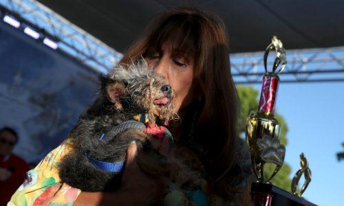 """Hässlichster Hund der Welt gekürt: So sieht """"Scamp the Tramp"""" aus"""