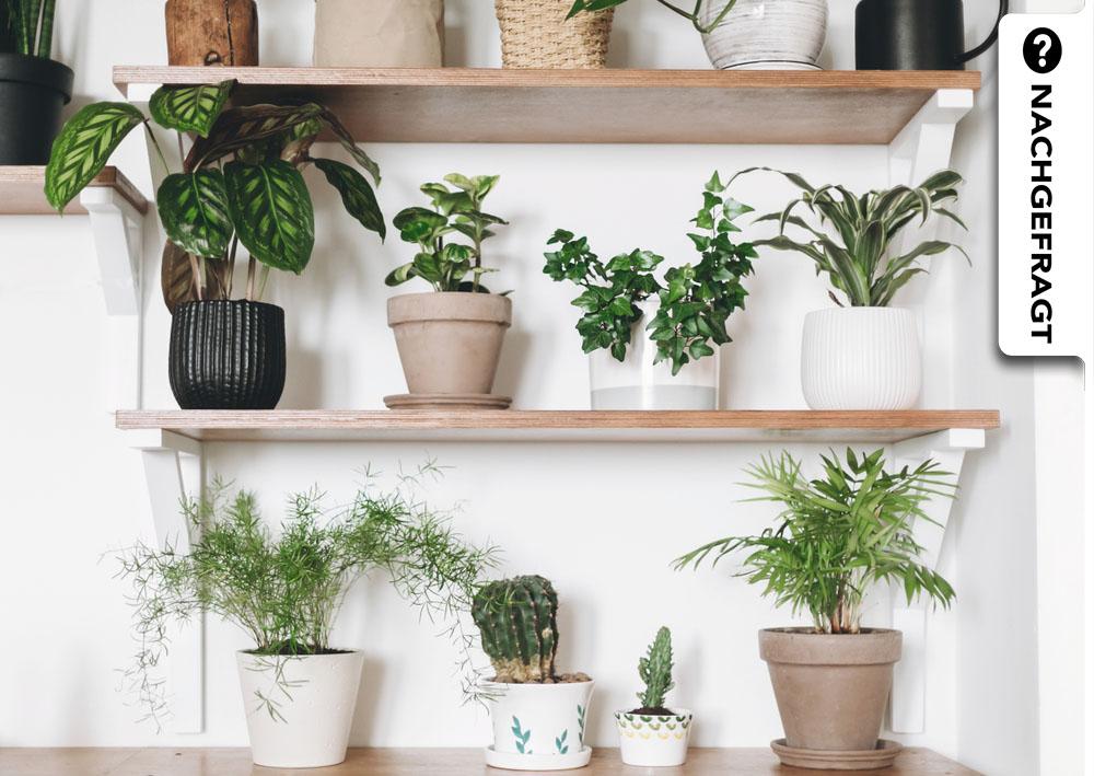 Zimmerpflanzen: Die perfekte Pflanze für jedes Zimmer