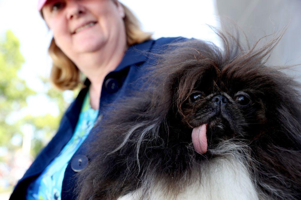 Wild Thang hässlichster Hund der Welt