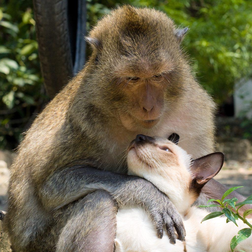 BFF-Ein-Affe-und-eine-Katze-weichen-einander-nicht-von-der-Seite