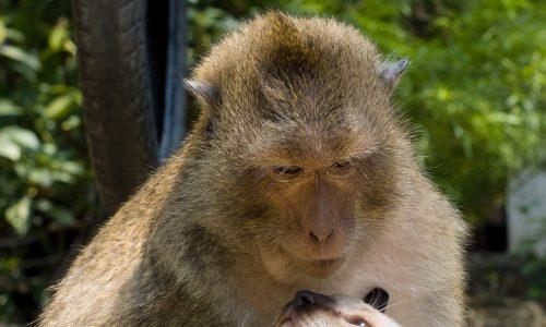 BFF: Ein Affe und eine Katze weichen einander nicht von der Seite