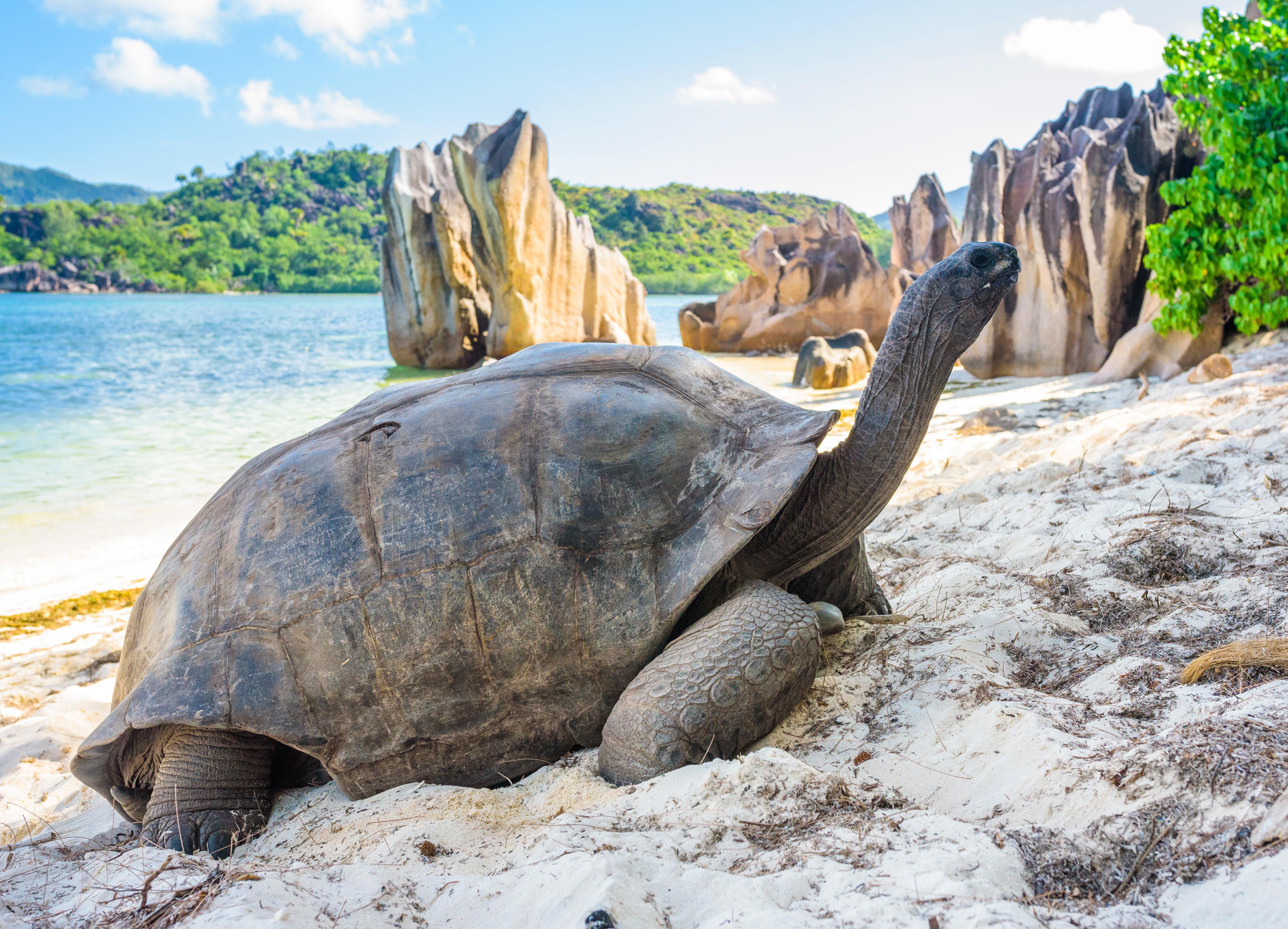 Foto: Jan Bures/Shutterstock.com