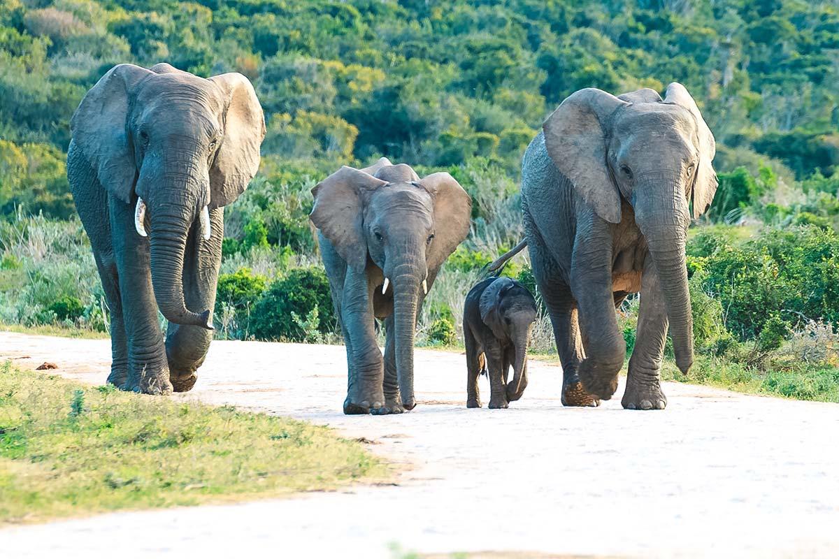 Elefantenfamilie im südafrikanischen Nationalpark/WeDesingTrips