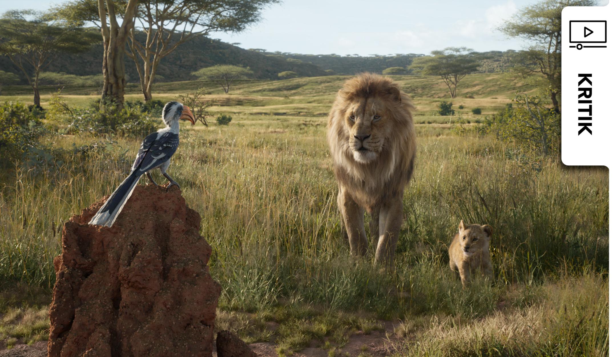König der Löwen: So ist die Neuverfilmung des Disney-Klassikers