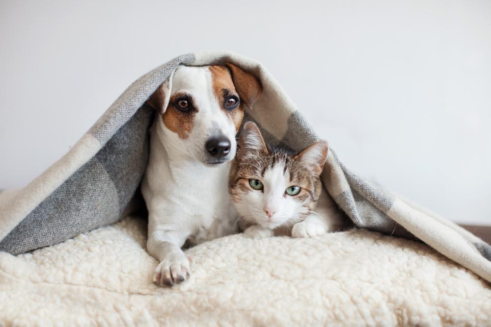 4 Tipps, wie dein Haustier zum Instagram-Star wird