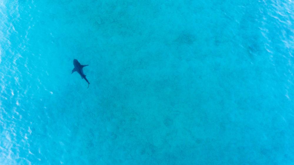 Vater rettet Kinder mit Drohne vor Hai-Angriff
