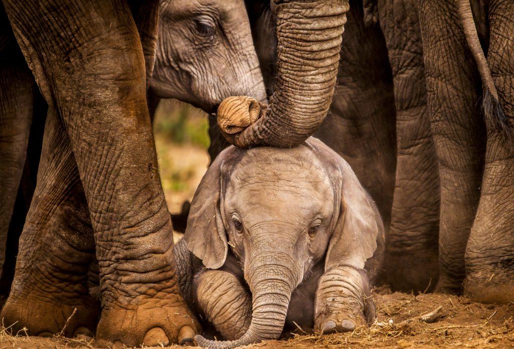 Elefantenbaby in Schönbrunn: Süßer Nachwuchs