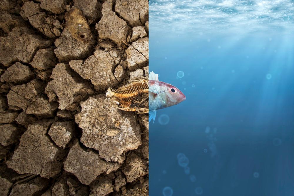 Dieser Instagram-Account macht mit Memes auf den Klimawandel aufmerksam