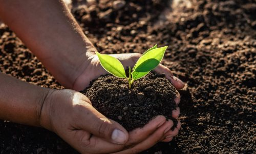 Ecosia: Mit dieser Suchmaschine pflanzt du durch deine Internetsuche Bäume