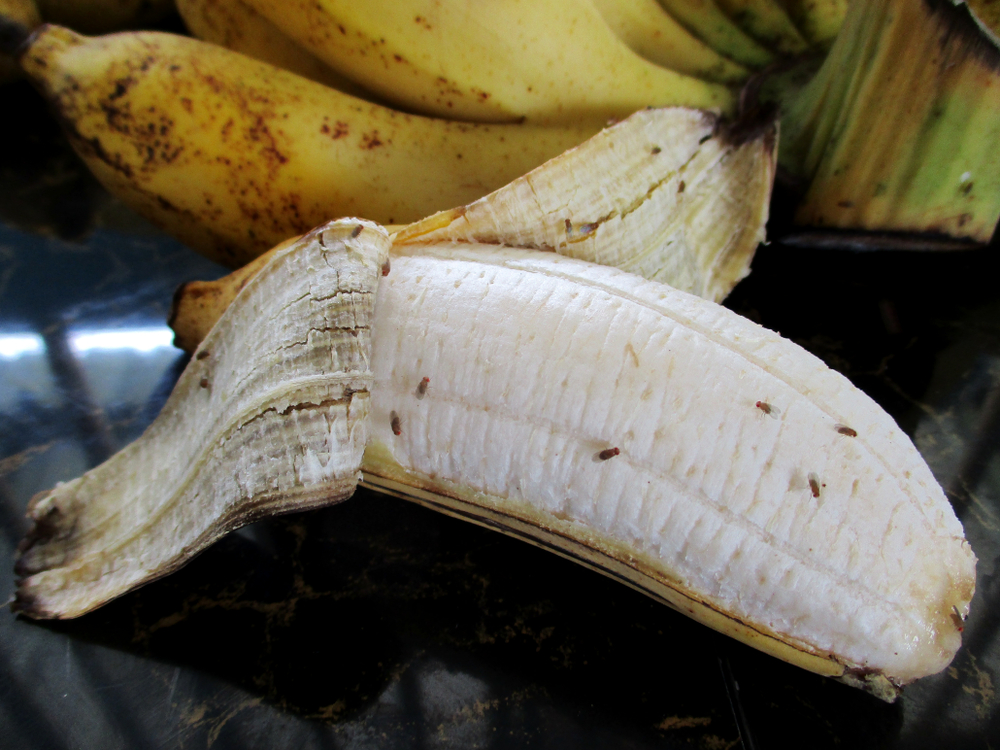 Fruchtfliegen bekämpfen: So wirst du sie endlich los
