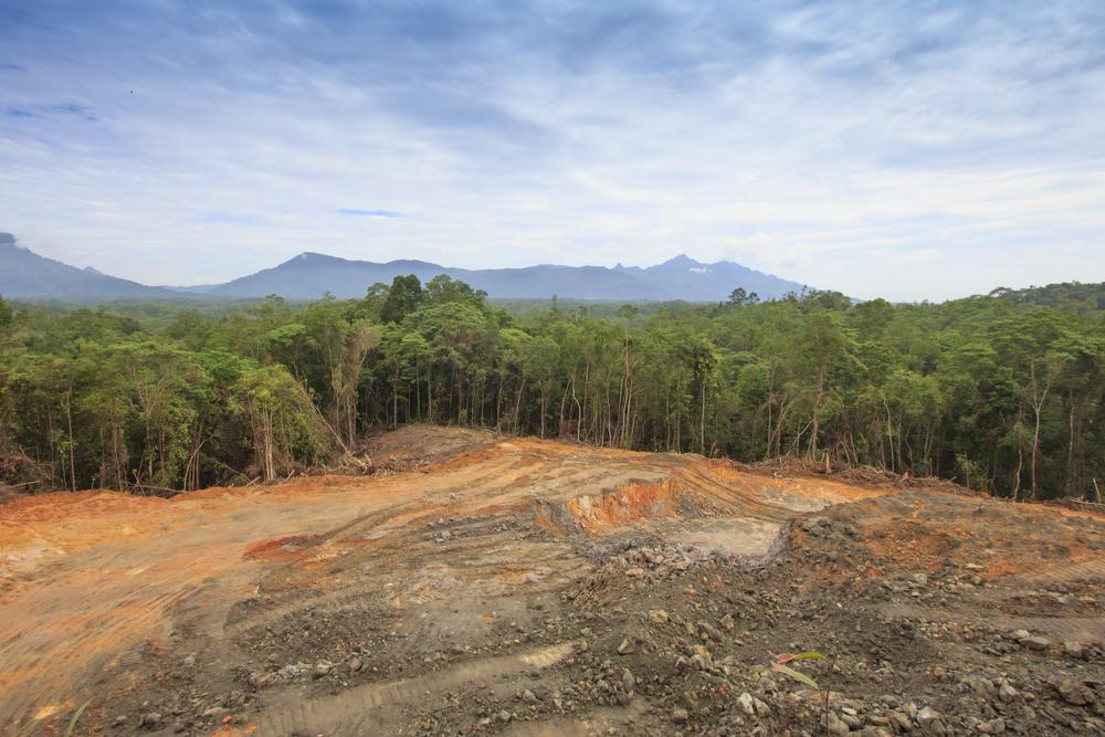Regenwald in Brasilien wird immer schneller abgeholzt