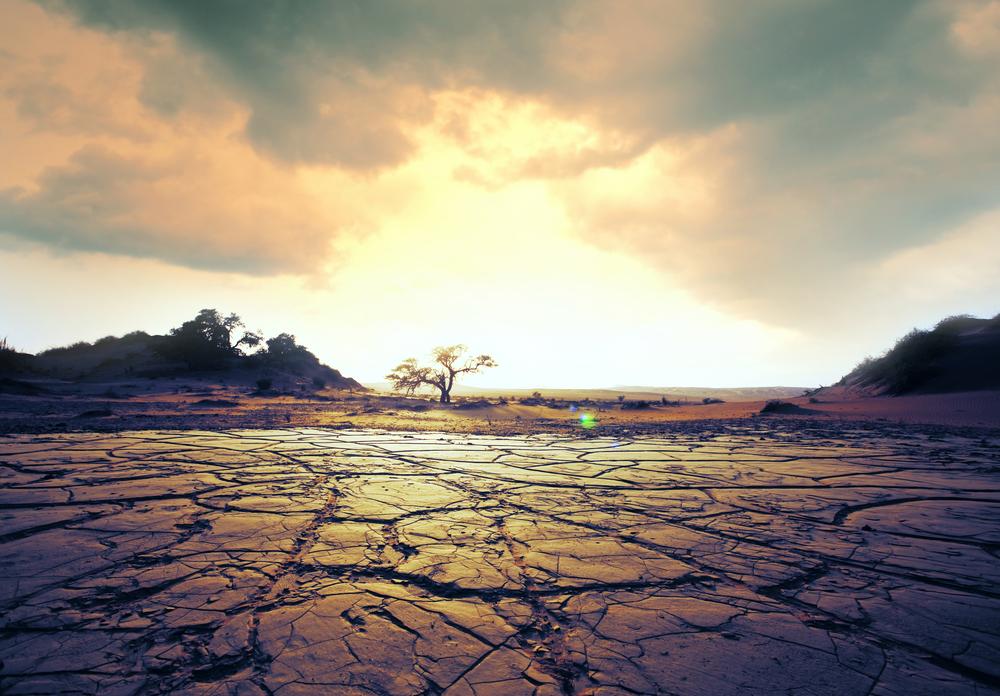 Weltklimabericht: Wir essen unseren Planeten kaputt