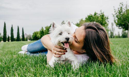 Studie: Mehr als die Hälfte der Hundebesitzer küssen Hund mehr als Partner