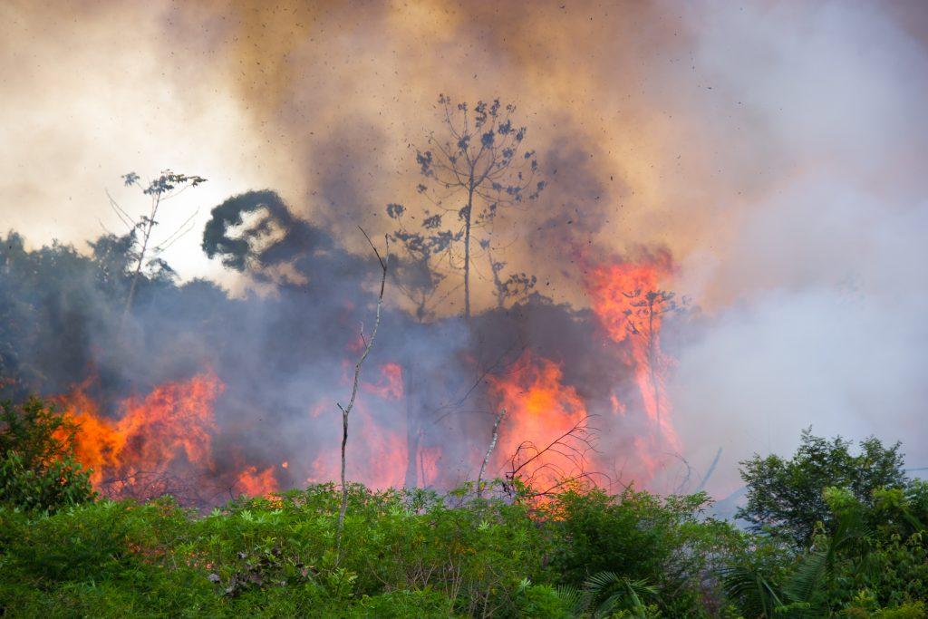 Soziale Medien: Immer mehr falsche Bilder des brennenden Amazonas