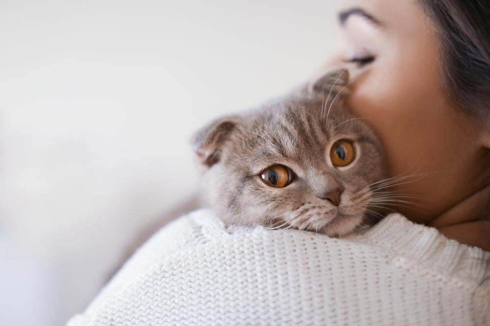 Wissenschaftlich bestätigt: Katzen lieben uns doch