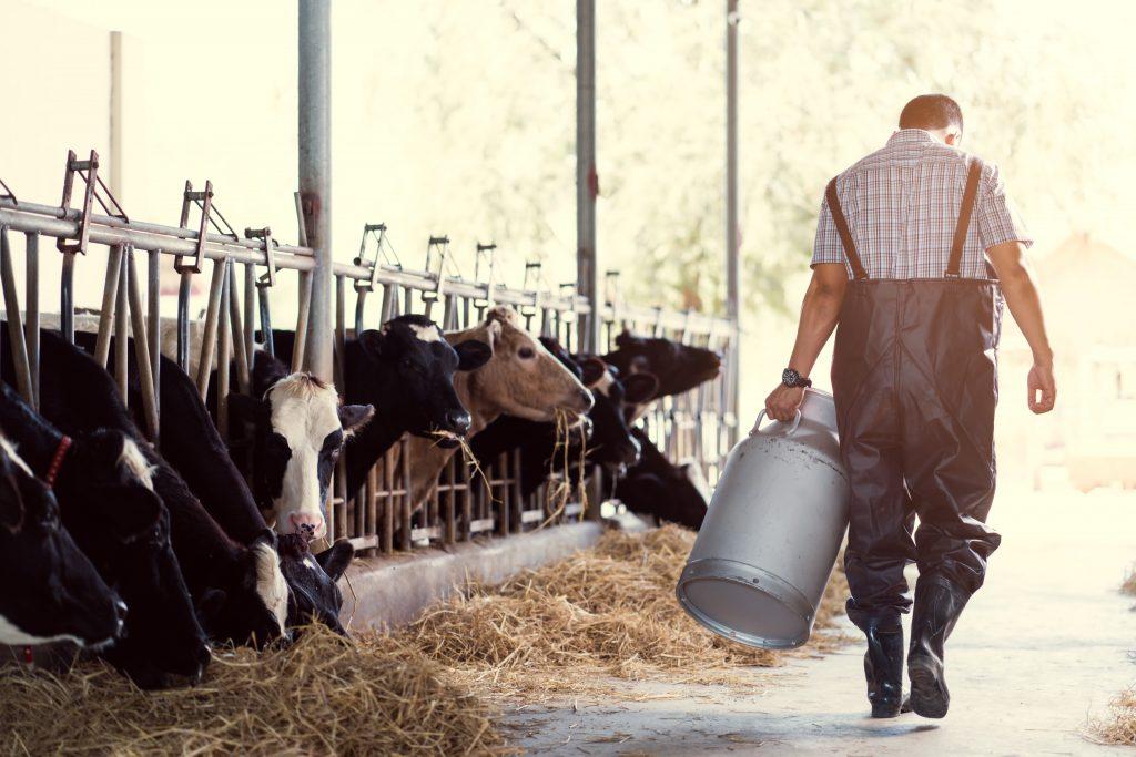 Bäuerin von Kuh getötet