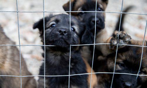 Tierquälerei in deutschem Versuchslabor aufgedeckt