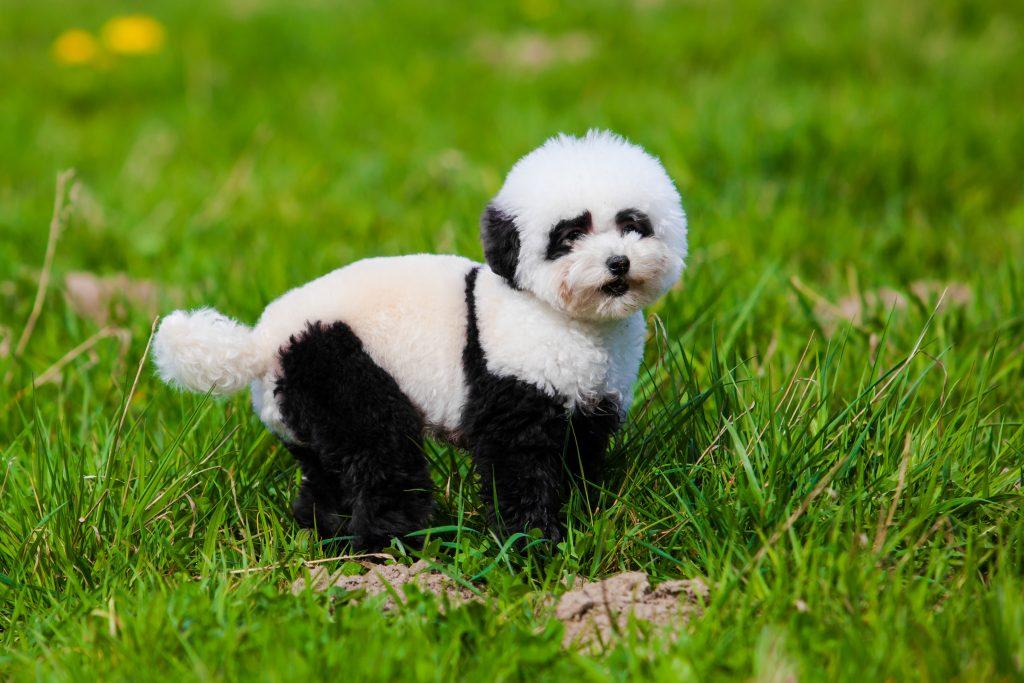 Tierschützer empört: Tiercafé in China färbt Hundebabys