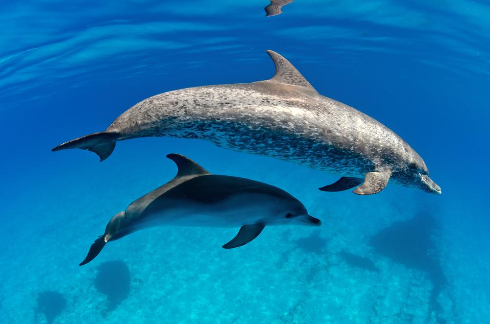 YouTuber isst Baby-Delfin: Inscope21 postet Statement