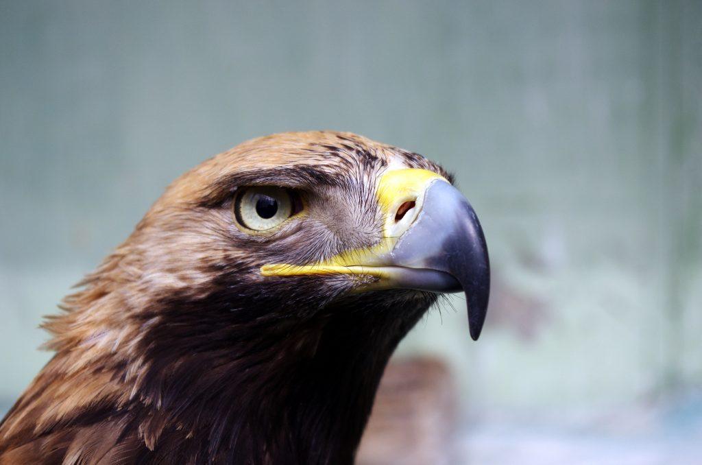 Video: Alpen aus Sicht eines Adlers