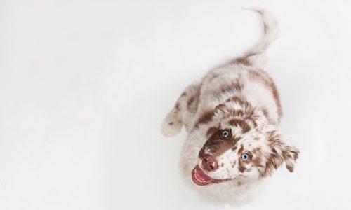 Die 8 süßesten Hunde auf Instagram
