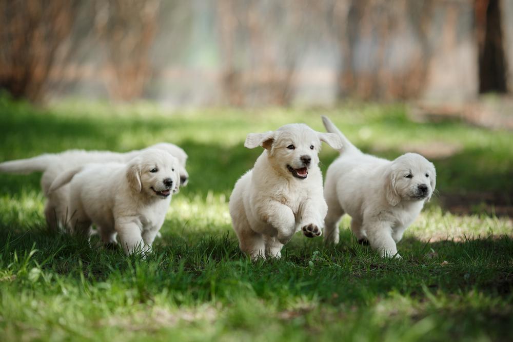Hunde-Welpe mit grünem Fell geboren