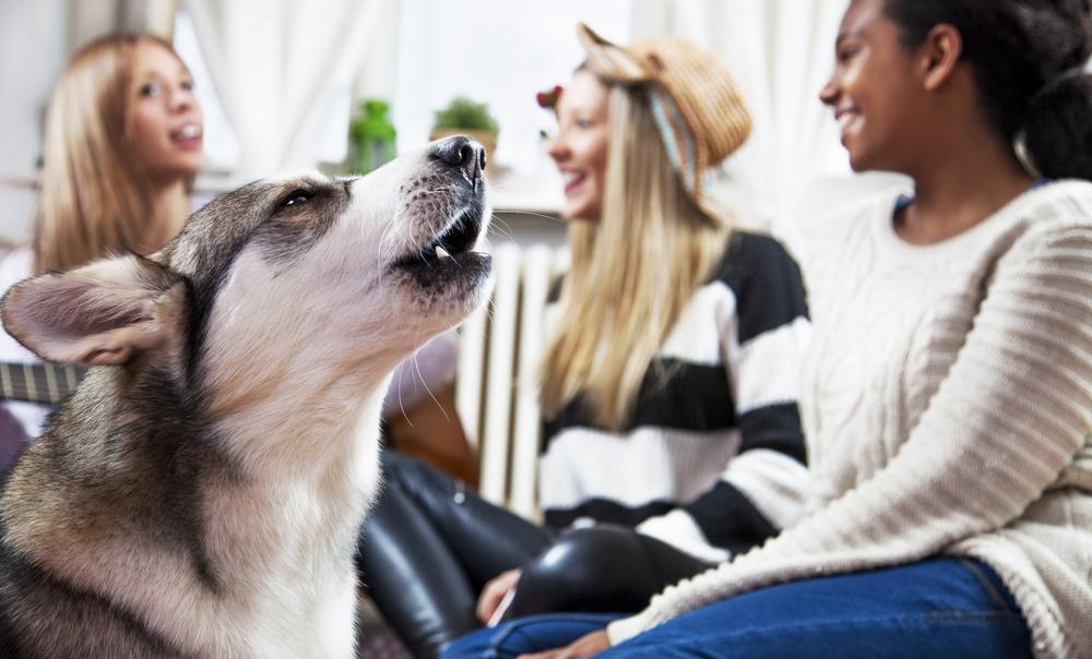 Hund kann mit seiner Besitzerin kommunizieren