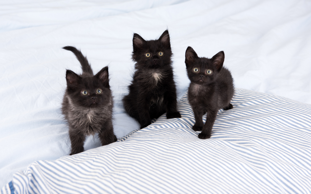 Hündin rettet 5 Katzenbabys vor dem Erfrieren