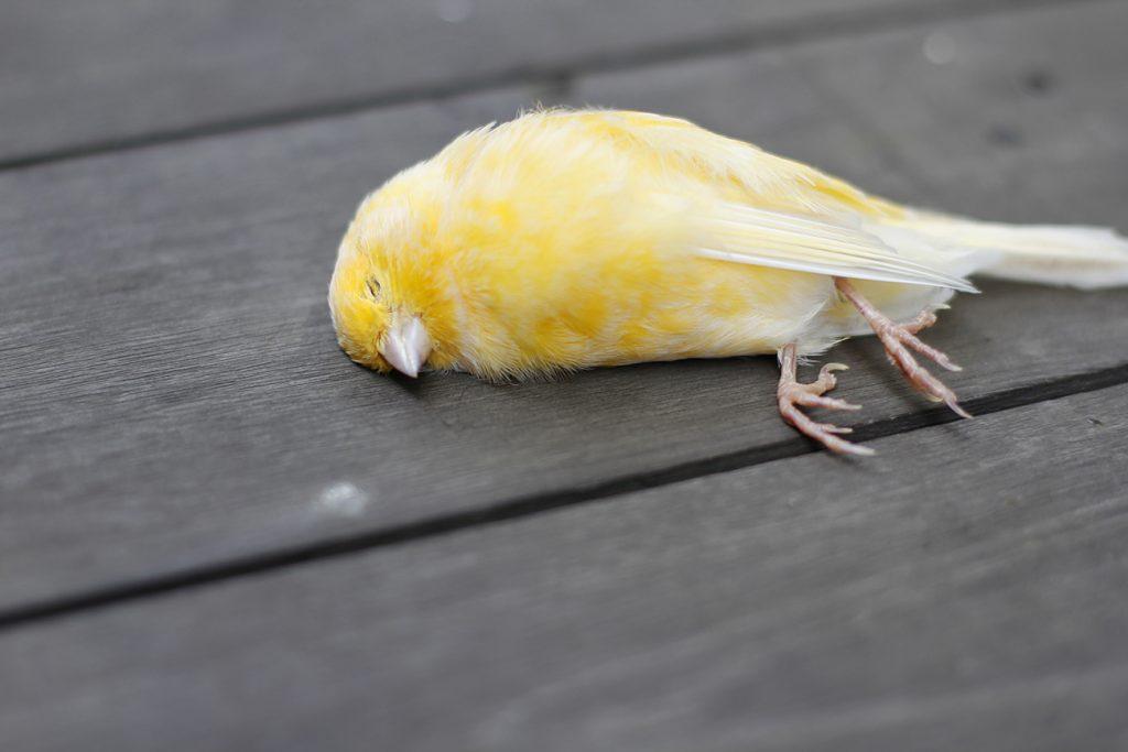 Europa: Das große Vogelsterben