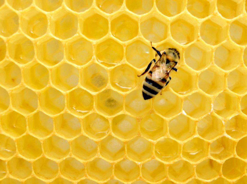 Instagram: Diese Biene setzt sich für Artenschutz ein