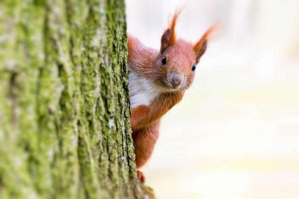 Eichhörnchen lebendig an Baum genagelt: Brutales Foto