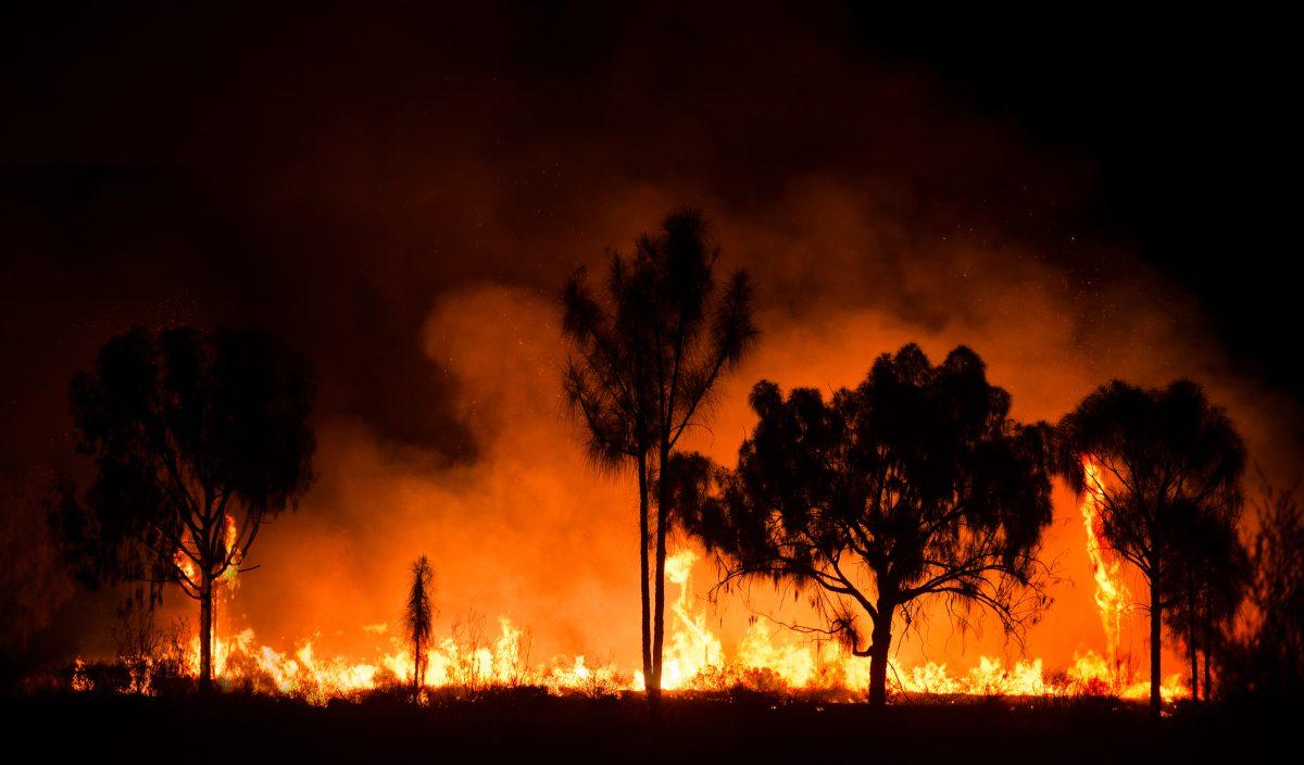 12 Tote durch Buschfeuer in Australien