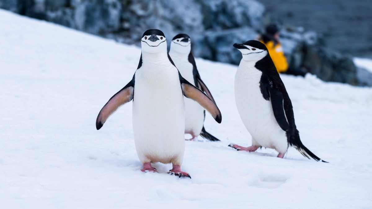 Studie: Weltweit 30.000 Tierarten bedroht