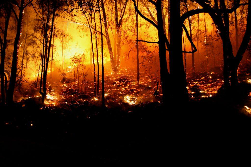 Australien: Buschfeuer entwickelt sich zu Mega-Brand